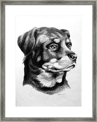 Rottweiler Devotion Framed Print by Patricia Howitt