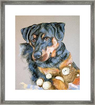 Rottweiler Dog Framed Print by Barbara Lightner