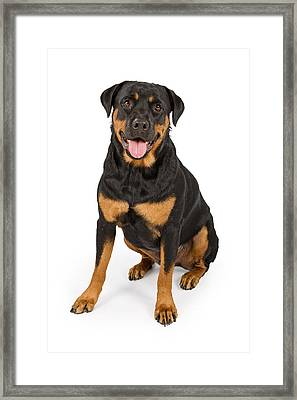 Rottweiler Dog Isolated On White Framed Print by Susan Schmitz
