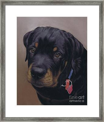Rottweiler Dog Framed Print
