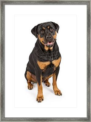 Rottweiler Dog With Drool Framed Print by Susan Schmitz