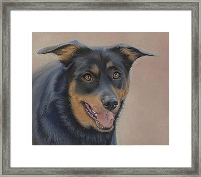 Framed Print featuring the painting Rottweiler - Drawing by Natasha Denger