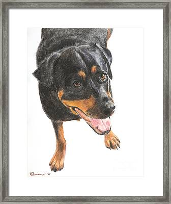 Rottweiler Looking Up Framed Print