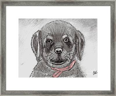 Rottweiler Pup Drawing With Color Splash Framed Print
