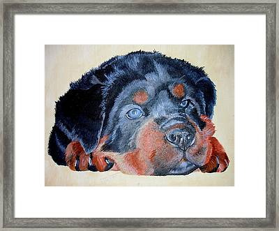 Framed Print featuring the painting Rottweiler Puppy Portrait by Tracey Harrington-Simpson