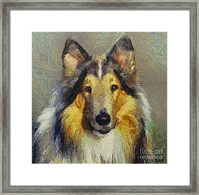 Rough Collie Framed Print by Dragica  Micki Fortuna
