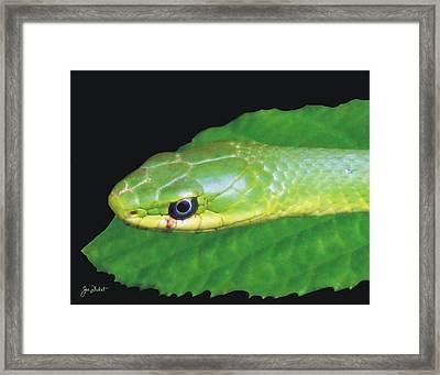 Rough Green Snake Framed Print