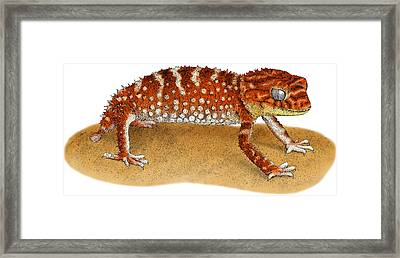 Rough Knob Tailed Gecko Framed Print by Roger Hall