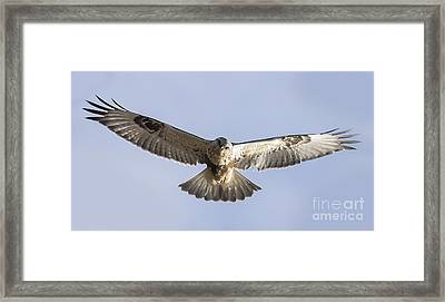 Rough-legged Hawk Coming Right At You Framed Print by Ricky L Jones