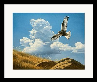 Flying Hawks Framed Prints