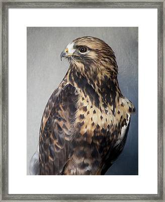 Rough-legged Hawk Framed Print by Paulette Thomas