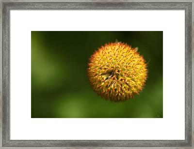 Round Flower Framed Print by Karol Livote