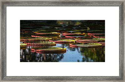 Round Leaves Of Victoria Regia. Royal Botanical Garden. Mauritius Framed Print by Jenny Rainbow