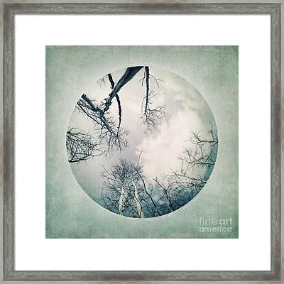 round treetops I Framed Print by Priska Wettstein