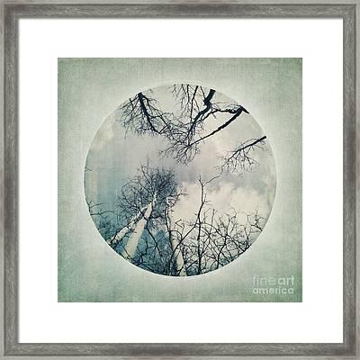 round treetops II Framed Print