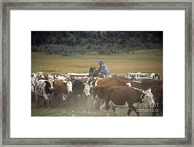 Cattle Round Up Patagonia Framed Print by James Brunker