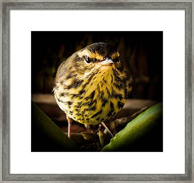 Round Warbler Framed Print by Karen Wiles