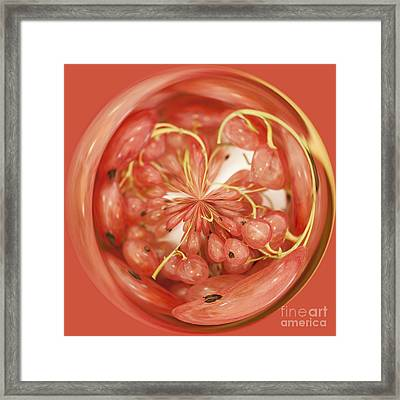 Round Whitecurrants Framed Print by Anne Gilbert