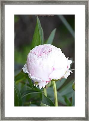 Rounded Bloom Framed Print by Sonali Gangane