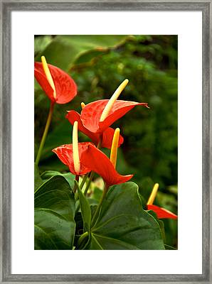 Rousing Reds Framed Print by Dee Dee  Whittle
