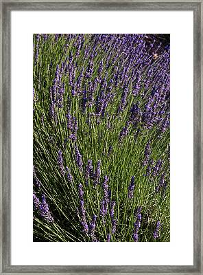Roussillon, Provence, France Framed Print by Sergio Pitamitz