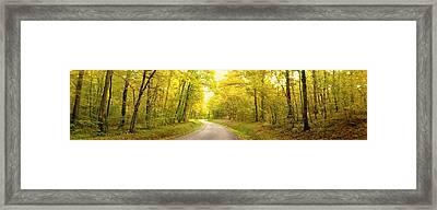 Route Dans La Foret Jaune Framed Print