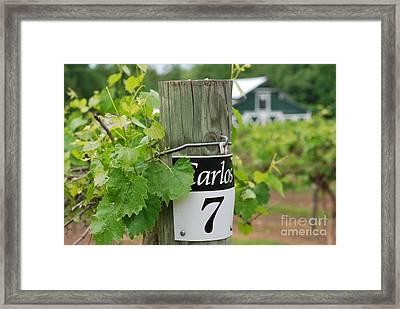 Row 7 Carlos  Framed Print by Gayle Melges