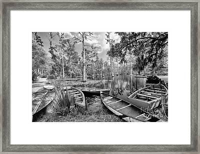 Row Boats In Cypress Tree Swamp IIi Framed Print by Dan Carmichael