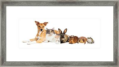 Row Of Domestic Pets Framed Print
