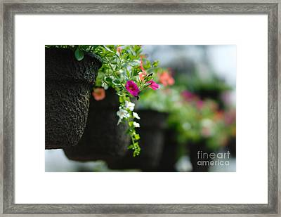Row Of Hanging Baskets Shallow Dof Framed Print