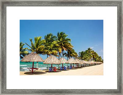 Row Of Palm Trees Framed Print