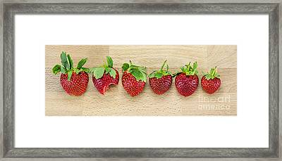 Row Of Strawberries  Framed Print by Svetlana Sewell