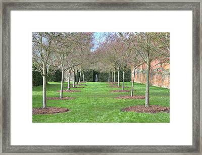 Row Of Trees In An English Countryside Scene Framed Print