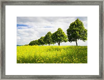 Row Of Trees In Spring Landscape Green And Yellow Framed Print by Matthias Hauser