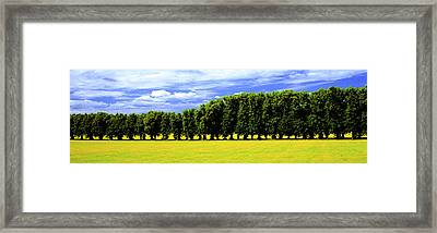 Row Of Trees, Uppland, Sweden Framed Print by Panoramic Images