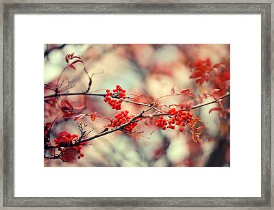 Rowan Tree With Berries Framed Print by Jenny Rainbow