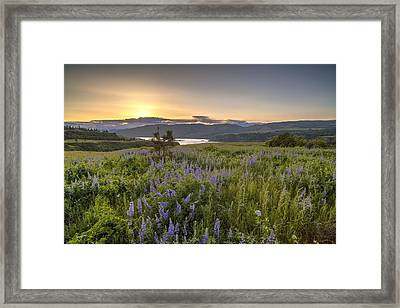 Rowena Crest Wildflowers Framed Print by Mike Reid