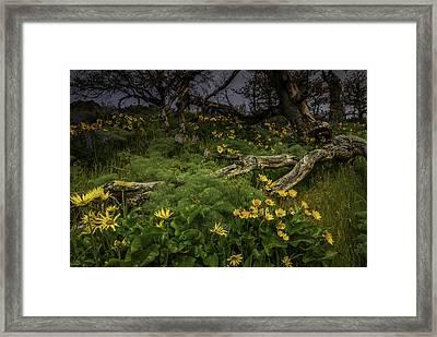 Rowena Preserve Framed Print