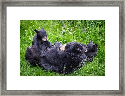 Rowr Mama Rowr Framed Print