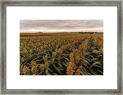 Rows Of Color Framed Print