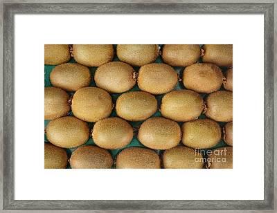 Rows Of Fresh Kiwifruits Framed Print by Yali Shi