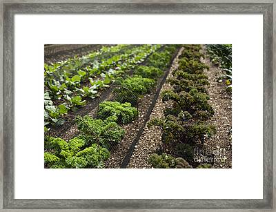 Rows Of Kale Framed Print by Anne Gilbert