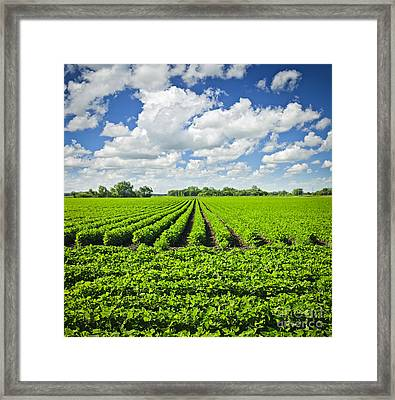 Rows Of Soy Plants In Field Framed Print