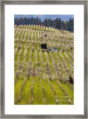Rows Of Spring Framed Print