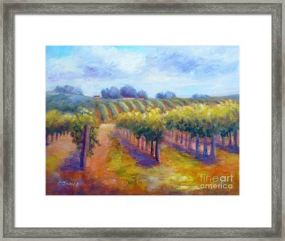 Rows Of Vines Framed Print by Carolyn Jarvis