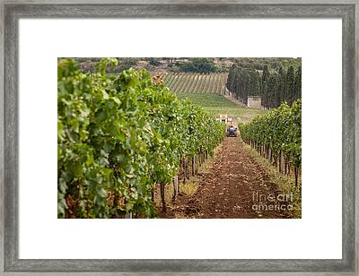 Rows On Vines With A Mechanical Harvester In The Distance Harves Framed Print
