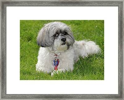 Roxey Glamour Framed Print by Arthur Fix