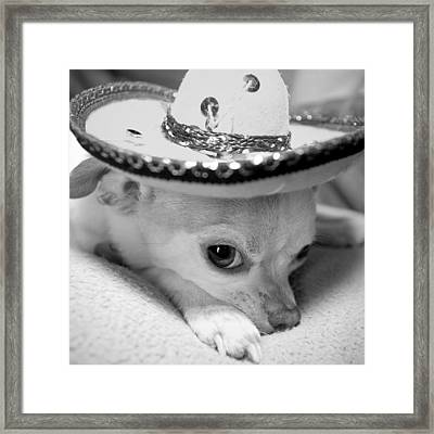 Roxie Framed Print by Glennis Siverson