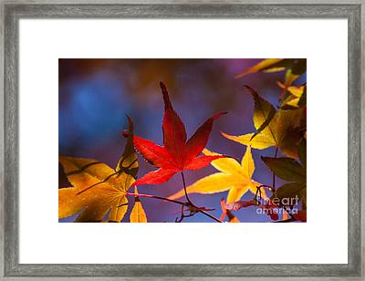 Royal Autumn B Framed Print by Jennifer Apffel