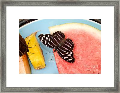 Framed Print featuring the photograph Royal Blue Butterfly by Eva Kaufman